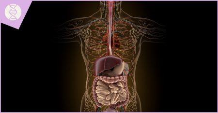 מומים בעובר במערכת השתן ומערכת העיכול